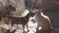 猫步走世界 <西班牙的午睡猫>