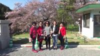 日本观光 2019.4.17