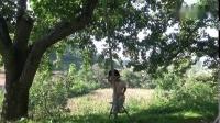 一颗50年的南果梨树能摘多少斤梨呢,小六子今天给你答案