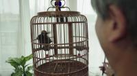 暂时分居导致离婚,与鸟为伴度过晚年生活