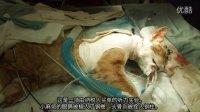 这就是动物实验的真面目