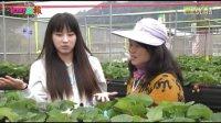 台灣苗栗大湖草莓依虹草莓園樂活新聞網路電視