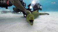 【牛男独家】牛男在大开曼岛潜水拍摄沉船