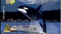 爱哟我的妈 2013-05-29 暴走野兽?动物伤人百分百要你命