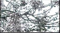 中国茶文化 03.从兴盛走向衰落—唐代茶文化