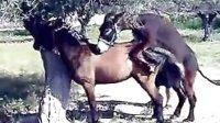 驴马也要爱爱
