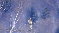 预言鸟——蒙台梭利儿童启智音乐 动物音乐 CD2 (儿童早教音乐)