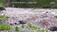 20130724青海牛心山羊群