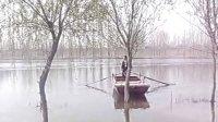 阜阳泉河畔上的春天