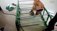 九饼版猫和老鼠