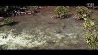 【中英字幕】美丽的红树林The Beauty of Mangrove Forests