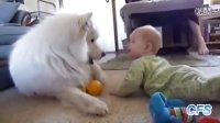 汪星人和宝宝搞笑视频集锦【我是大嘴巴】
