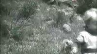 【TVB】【记录片】《动物之最》十大动物冤家(上)
