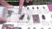 小梦❤昆虫大作战❤野外昆虫采集