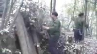 庆元香菇栽培