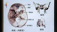 中国医科大学系统解剖学精品课程教学视频 02(免费)