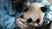 旅游:大熊猫与它们的管家