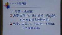 中国医科大学 系统解剖学 30讲