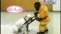 笑死人的猩猩消防员