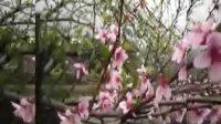 九华山沐浴三月风