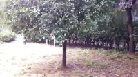 iPhone4拍摄公园