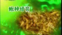 泥鳅优质高产养殖