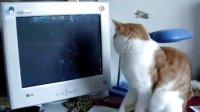 猫的研究:计算机屏幕保护之一