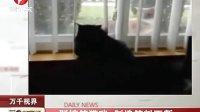 一群搞笑猫咪 制造笑料不断 111228 每日新闻报