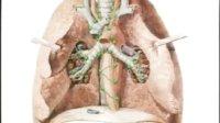 卫生部医学视听教材-系统解剖学-XT002 淋巴系统解剖