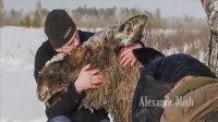 人类救助动物 动物心存感激