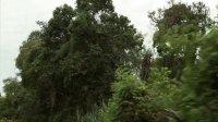 【保护森林】美好的油 (2)