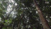 【保护森林】美好的油 (4)