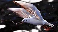 《彩云伴海鸥》--高胜美演唱