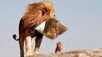 《动物世界片头曲》与动物震撼瞬间