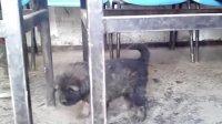 被虐的小狗