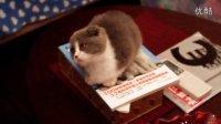 小猫头跟着逗猫棒转MVI_0130
