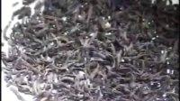 红茶的加工技术