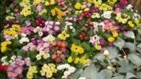 沧州市第二届迎春花卉展
