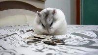 鼠鼠吃瓜子