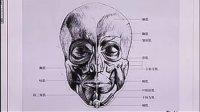 04-头部造型结构-头部肌肉