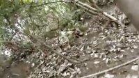 动物大战-鳄鱼VS鳗鱼 惨烈战况