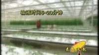 西红柿无土栽培技术