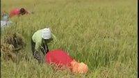 五良活化种植养殖模式四