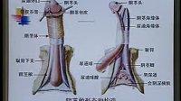 中国医科大学 系统解剖学 17