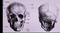 03-头部造型结构-头部骨骼