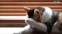 ePrice比价王—索尼 A55 录影测试(三):白天室內