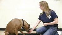 【神奇项圈 宠物防爆冲胸背训练系列】DOG TRICKS  --Paw Shake