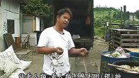 素食猪的由来 养猪户骆鸿贤的觉悟_标清