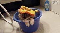 搞笑动物!正在沐浴的猫猫