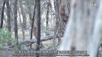 第九集 狩猎天堂澳大利亚